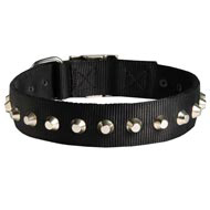 Exclusive Nylon Newfoundland Collar with Awesome Nickel Cones