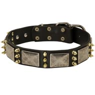 Newfoundland Spiked Leather Collar with Nickel Plates