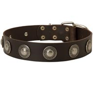 Leather Newfoundland Collar Decorated with Silver Conchos