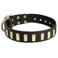 Fancy Leather Newfoundland Collar with Brass Plates