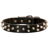 Fancy Design Leather Newfoundland Collar with Nickel Pyramids