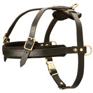 Leather Newfoundland Harness for Tracking and Pulling