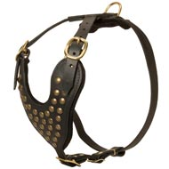 Adjustable Studded Leather Newfoundland Harness for Fashion Walking