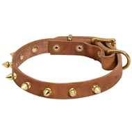 Walking Designer Leather Newfoundland Collar with Brass Spikes