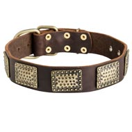 Leather Newfoundland Collar with Massive Brass Plates