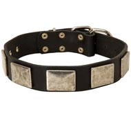 Leather Newfoundland Collar with Large Nickel Plates