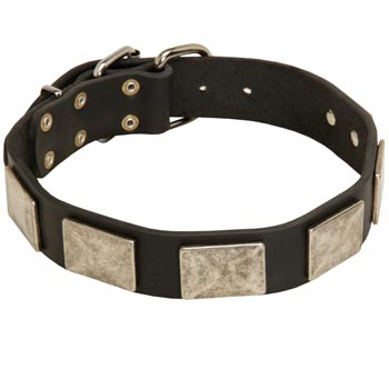 Walking Leather Newfoundland Collar