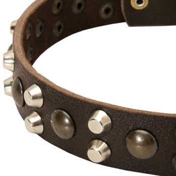 Leather Newfoundland Collar with Hand Set Studs
