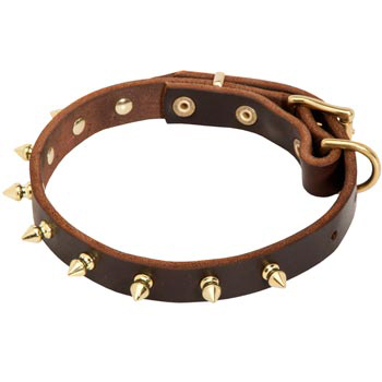 Leather Newfoundland Collar with Brass Spikes