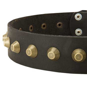 Leather Dog Collar with Brass Pyramids for Newfoundland