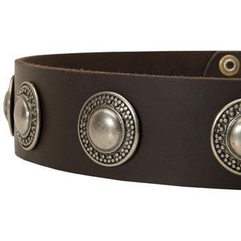 Leather Dog Collar with Conchos for   Newfoundland