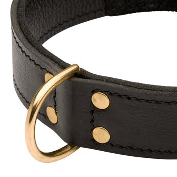 Brass D-ring Stitched to Leather Newfoundland Collar