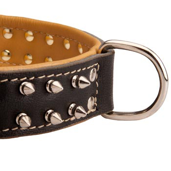Padded Leather Newfoundland Collar Spiked Adjustable for Training