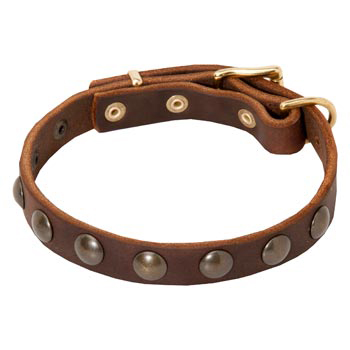 dog collars with studs