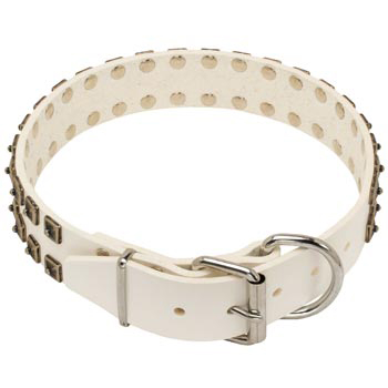 White Leather Dog Buckle Collar for Newfoundland