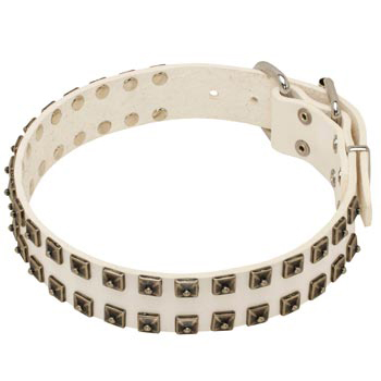 Studded White Leather Dog Collar for Newfoundland