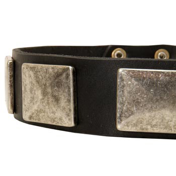Wide Leather Newfoundland Collar for Walking