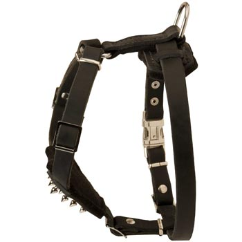 Newfoundland Leather Harness for Puppy Walking and Training