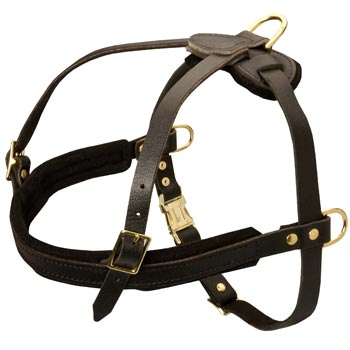 Leather Newfoundland Harness for Dog Off Leash Training