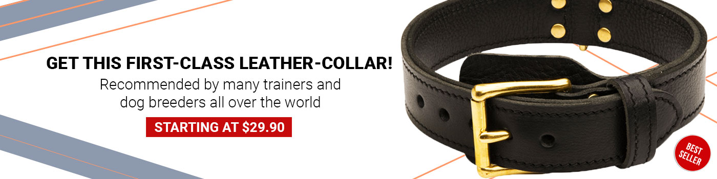 Training 2 Ply Leather Newfoundland Collar