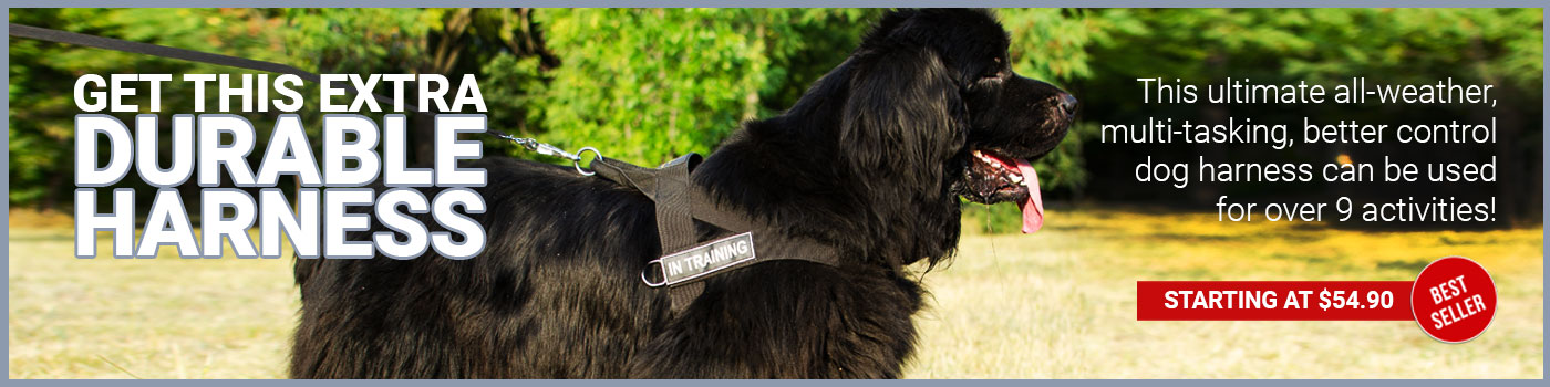 Newfoundland Harness Nylon with Patches